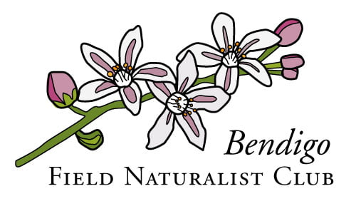 Bendigo Field Naturalists
